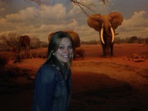 OMG, elephants!!