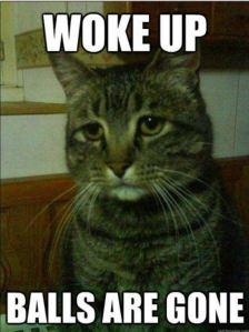 depressed-cat-13