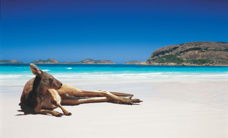 kangaroo-on-the-beach-jpg